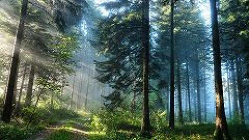 В храме свт. Николая Мирликийского на Трех горах был совершен молебен о сохранении лесов России