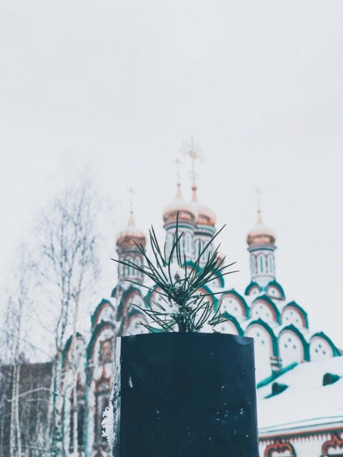 Епископ Павлово-Посадский Фома вместе с прихожанами посадил кедры на территории храма свт. Николая